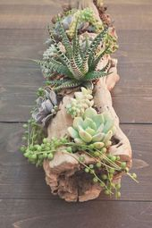 Watering cacti and succulents: tips and tricks to know