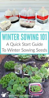 Winter sowing seeds: a quick start guide