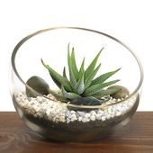Zen Aloe small bowl terrarium kit